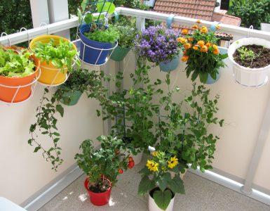 Mini Jardin Sur Un Balcon
